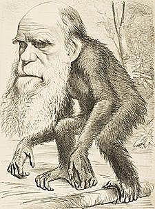 la imagen en  la caricatura