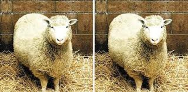 Scientists Cloned a Sheep