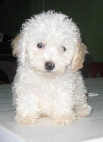 When I got my  first dog