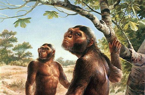 Periodo Mioceno