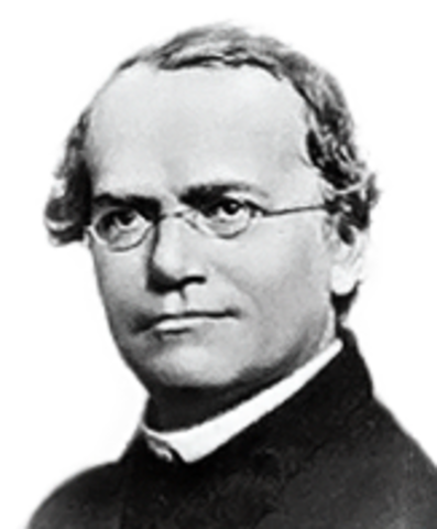 Gregor Mendel discover the laws followed by inheretance of traits