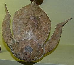 PECES ACORAZADOS (paleozoico)