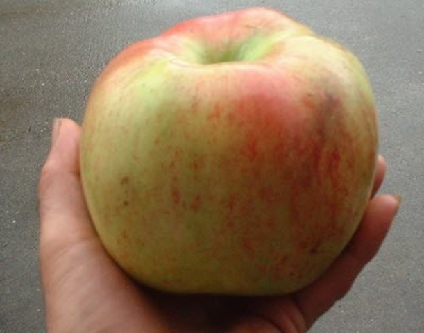 Canadian Biotechnology company asks U.S. to approve Gmo apples