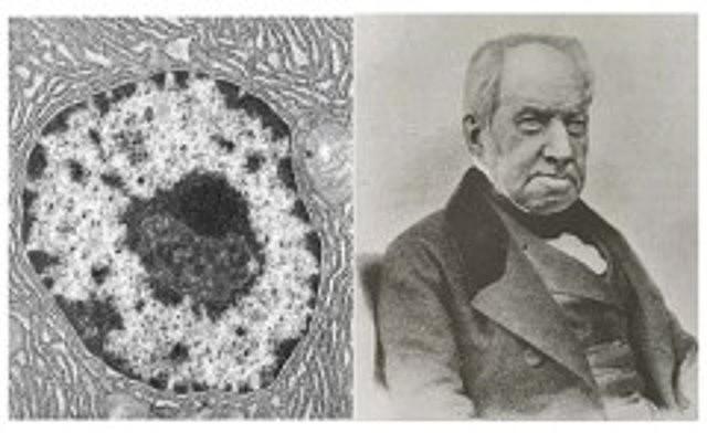 Robert Brown y el Núcleo Celular