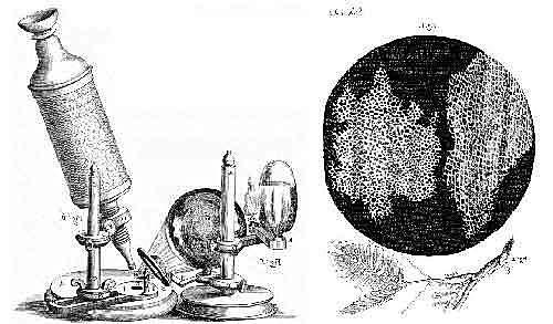TEORÍA CELULAR -Matthias Schleiden y Theodore Schwann