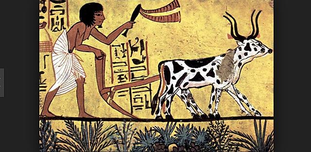 Farming Begins in the Fertile Crescent