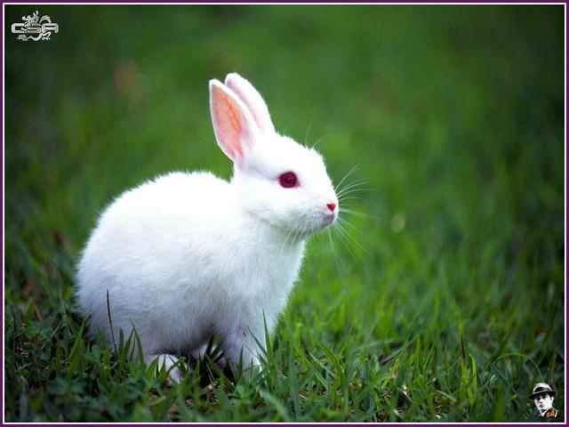 My rabbit Rosita