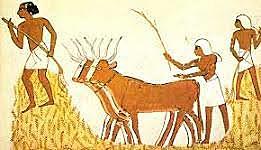 Comienza la domesticación de los animales
