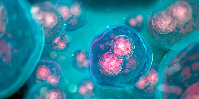 Embriones artificiales
