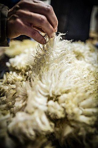 Cueros, lana y tasajo.