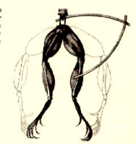 Luigi Galvani creates muscle spasms in a frog using electricity
