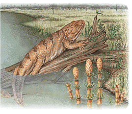 Devonian - The first Amphibians appeared