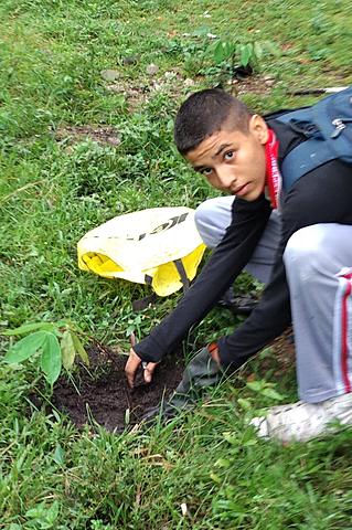 sembrando un árbol