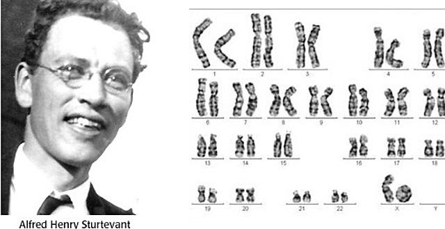 Alfred Sturtevant realiza el primer mapa genético de un cromosoma.
