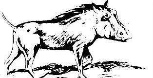 Introducción del cerdo en América