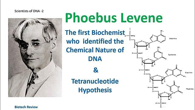 Phoebus Levene