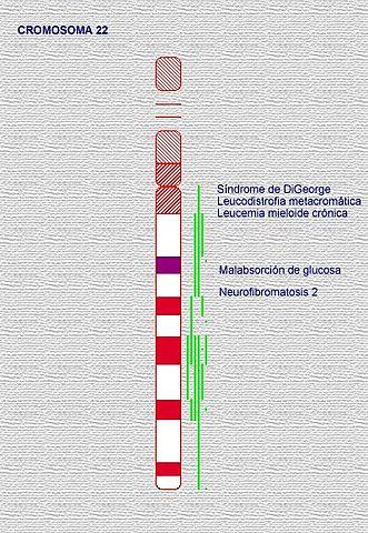Secuencia el primer cromosoma