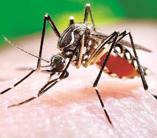Primeros enfermos de dengue notificados.