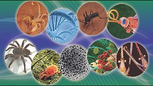 Programa Especial de Investigaciones y Enseñanzas sobre Enfermedades Tropicales.