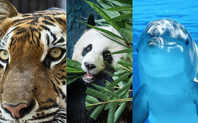 Definición de aprender en animales