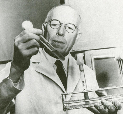 René Dubos. (Saint Brice, 1901 - Nueva YorK, 1982)