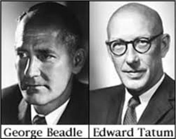 """Un Gen, Una Enzima"" - George Wells Beadle y Edward Lawrie Tatum"