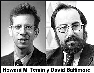 """Retrotranscriptasa"" - Temin y David Baltimore"