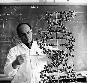 """""""DNA Z"""" - Alexander Rich"""