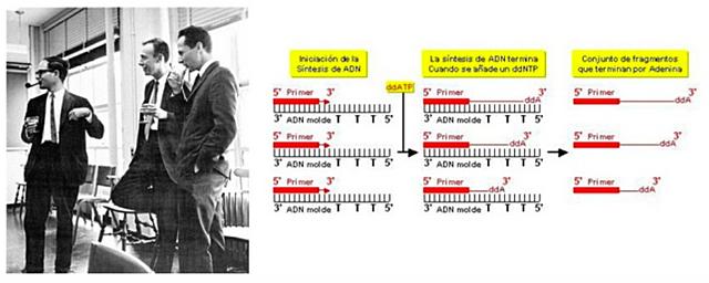 """""""Primera Secuenciación de DNA"""" - Walter Gilbert y Allan Maxam, y Fred Sanger"""