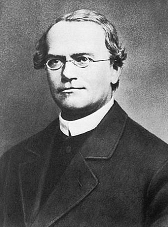 """""""Genes --> Responsables de la Transmisión de los Caracteres Hereditarios"""" - Gregor Mendel"""