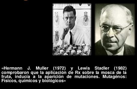 """""""Mutación en Genes"""" - Hermann Muller y Lewis Stadler"""