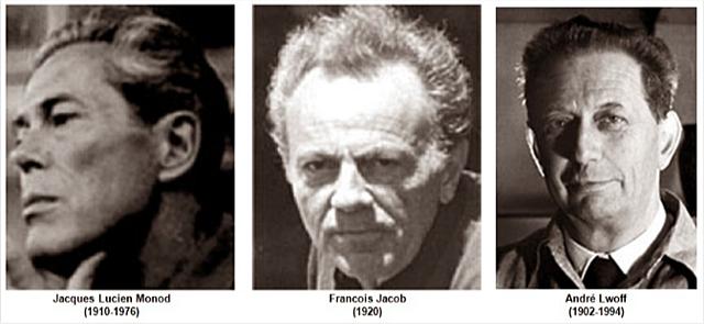 """""""Operones"""" - François Jacob, Jacques Lucien Monod y André Lwoff"""