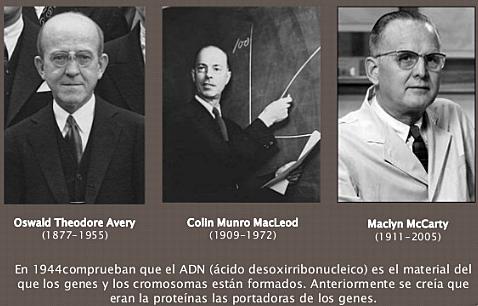 """""""DNA es el Único Responsable del Principio Transformante. """" - Oswald Theodore Avery, Colin MacLeod y Maclyn McCarty"""