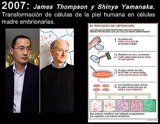 """""""Transformaron de Células de la Piel Humana en Células Madre Embrionarias"""" - James Thompson y Shinya Yamanaka"""