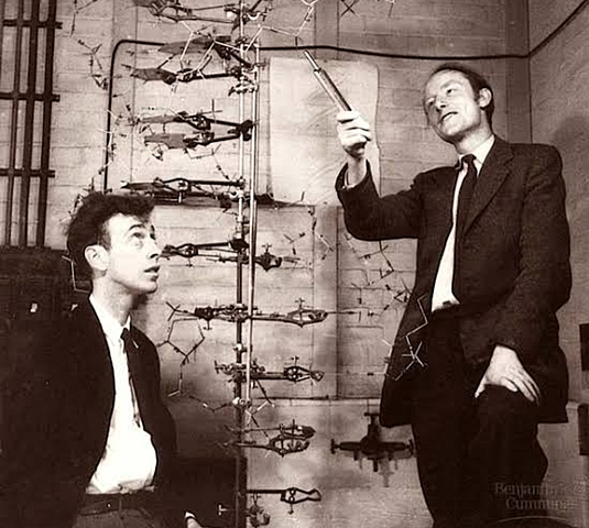 """Doble Hélice del DNA"" - James Watson y Francis Crick"
