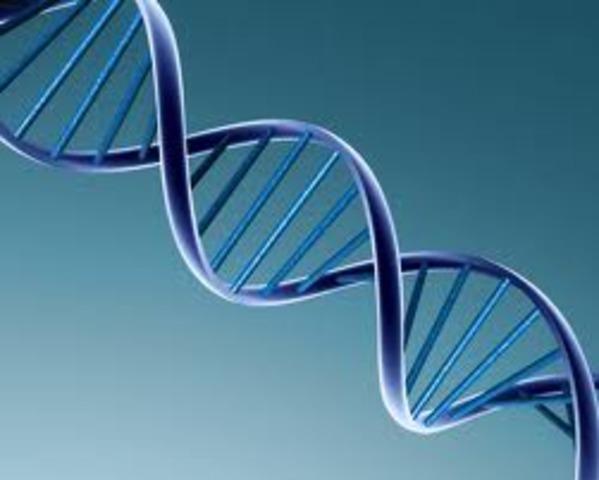Se descubre el ADN.