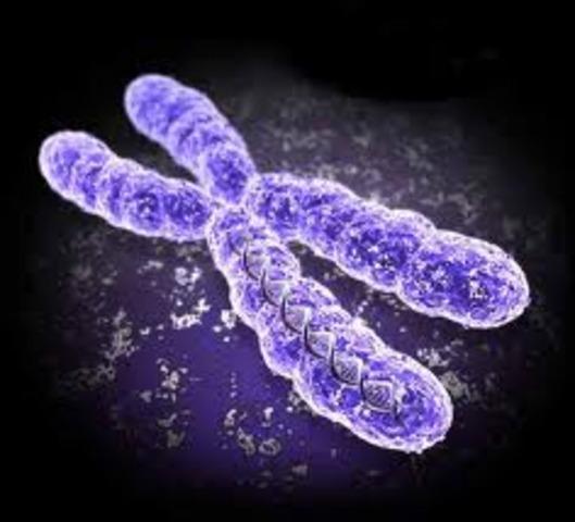 Se descubren los cromosomas.