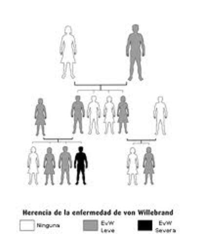 Se prueba que los genes determinan la herencia.