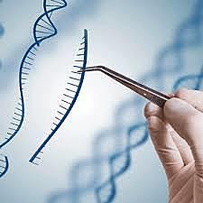 Técnica CRISPR