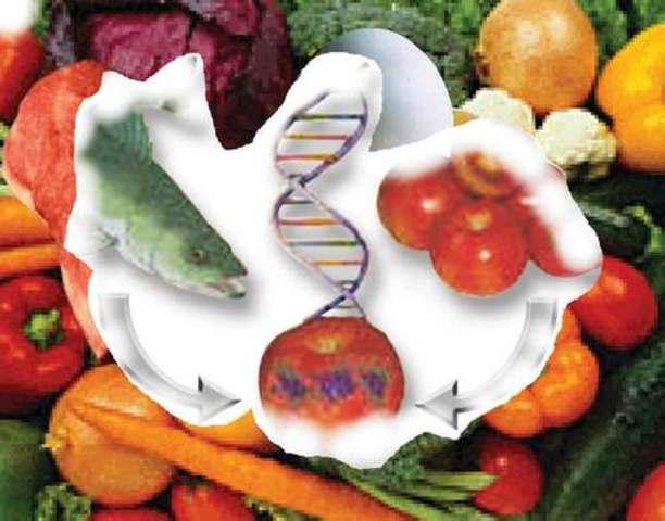 Se obtiene el primer producto vía ingeniera genética