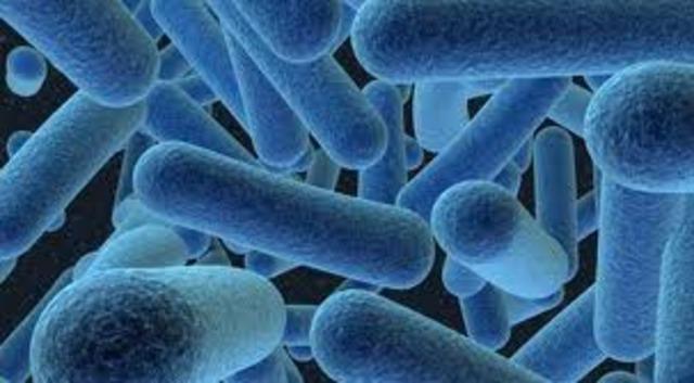 La bacteria.