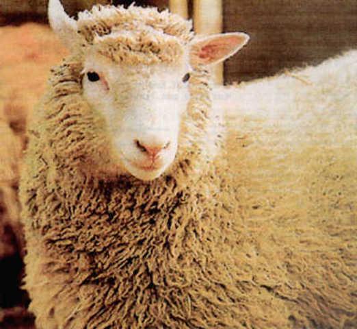 Colonacion de la oveja Dolly.