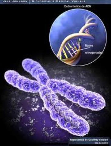Primeras secuencias del genoma humano.