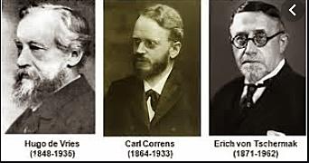 redescubrimiento de Mendel