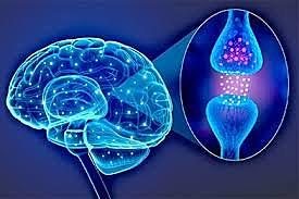 La Neurofisiología