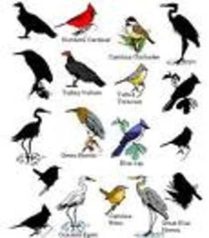 John James Audubon painted 435 species of birds