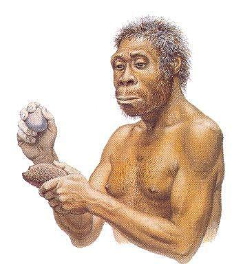 Evolución al Homo ergaster- hace dos millones de años hasta 50000 a.C