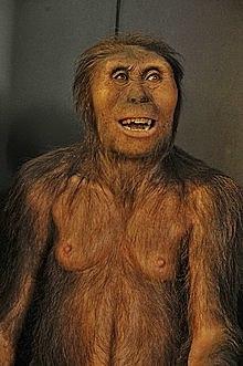 Australopithecus (monos del sur) - hace 4 millones de años hasta los dos millones de años