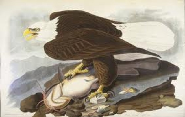 Audubon leaves for America