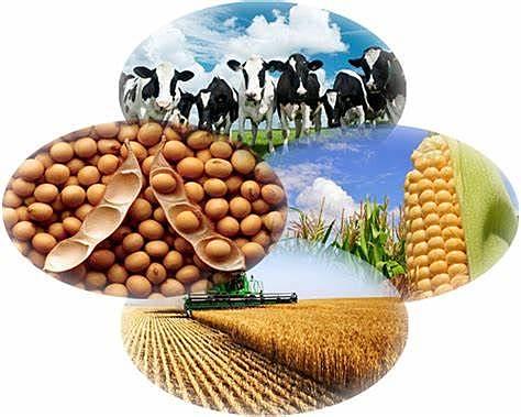 EL MARKETING DE LOS PRODUCTOS AGRICOLAS